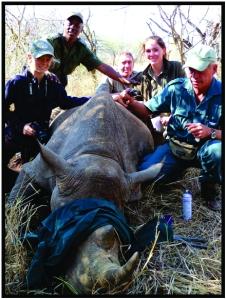 Black rhino dart